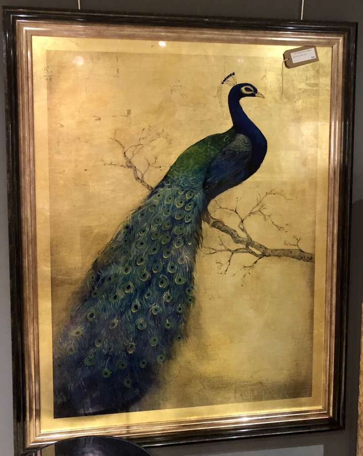Golden peacock picture